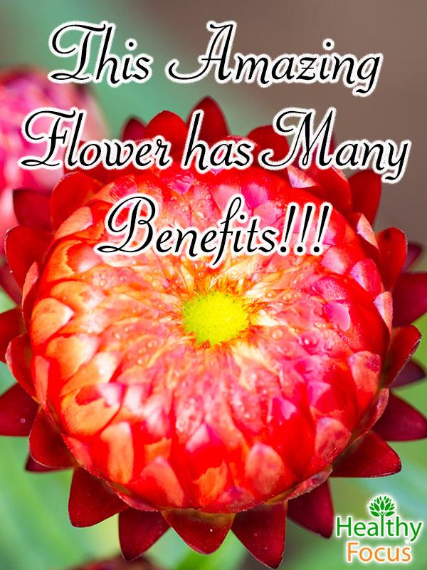 MIG-This-Amazing-Flower-has-Many-Benefits