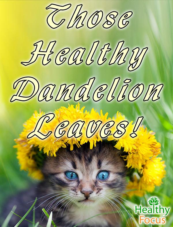 mig-Those-Healthy-Dandelion-Leaves