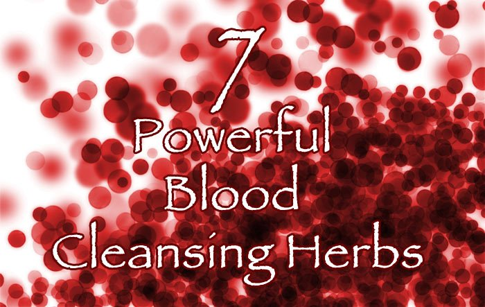 7 Powerful Blood Cleansing Herbs
