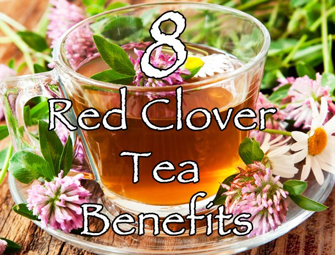 red clover tea benefits