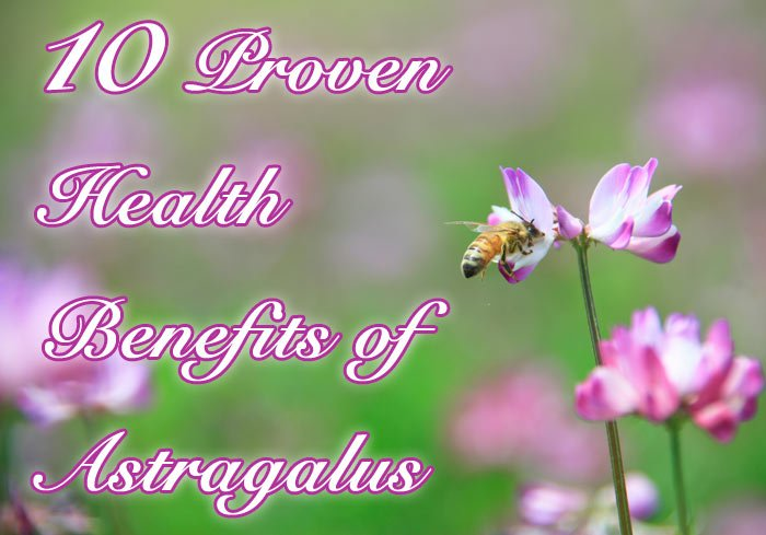 10 Proven Health Benefits of Astragalus