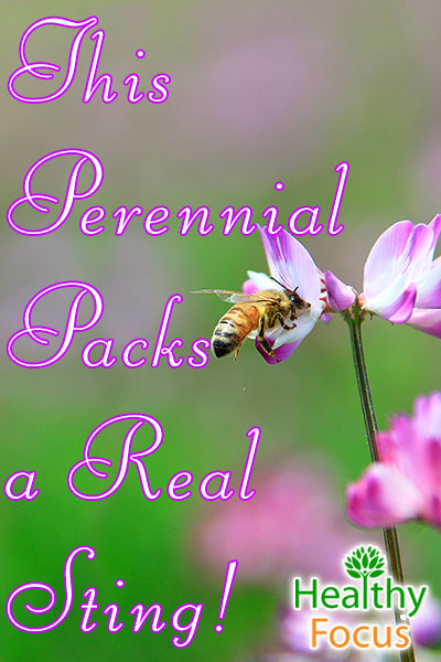 mig-this-perennial-packs-a-real-sting