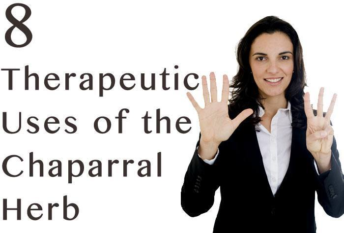 hdr-8-Therapeutic-Uses-of-the-Chaparral-Herb