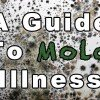 A Guide To Mold Illness
