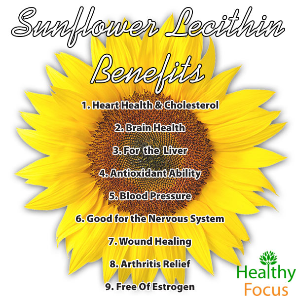 Health benefits of sunflower lecithin