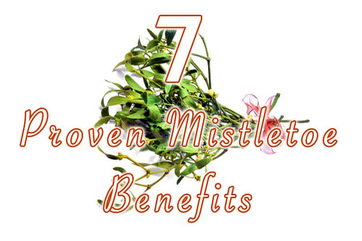 hdr-7-Proven-Mistletoe-Benefits