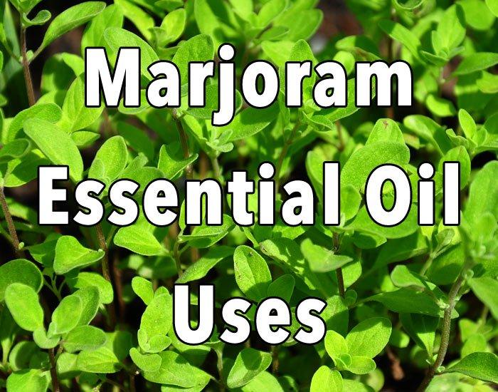 Benefits of Marjoram Essential Oil