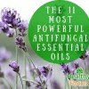 The 11 Most Powerful Antifungal Essential Oils