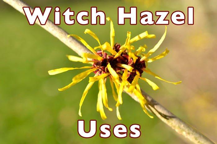 Witch Hazel Benefits
