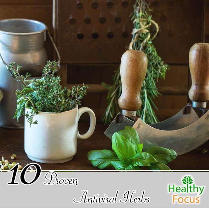 hdr-10-Proven-Antiviral-Herbs