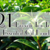 21 Proven Tea Tree Essential Oil Benefits