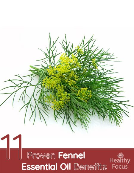 11 Proven Fennel Essential Oil Benefits