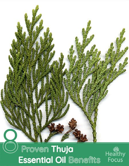 Proven Thuja Essential Oil Benefits