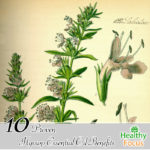11 Science Backed Hyssop Essential Oil Benefits