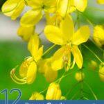 12 Proven Cassia Essential Oil Benefits