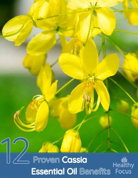 Cassia Essential Oil Benefits