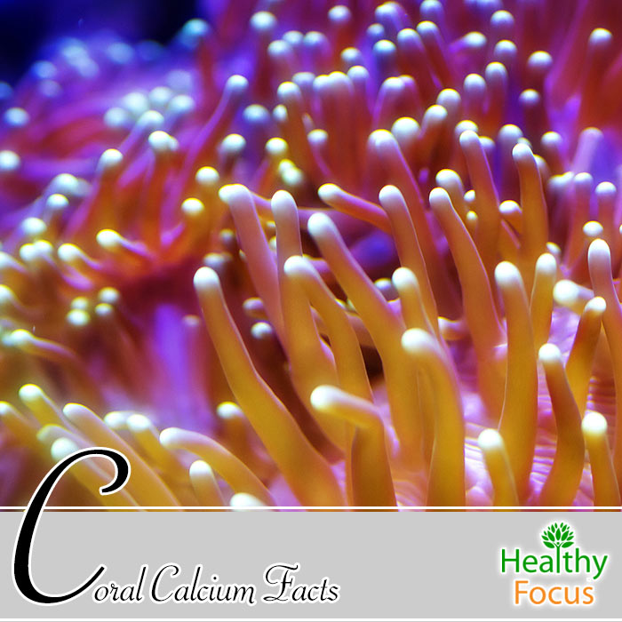 hdr-Coral-Calcium-Facts