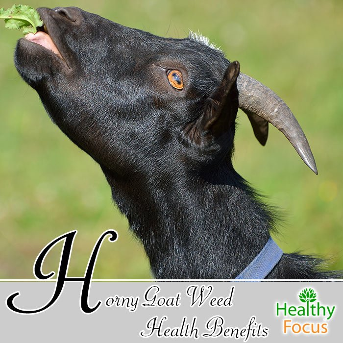 hdr-Horny-Goat-Weed-Health-Benefits