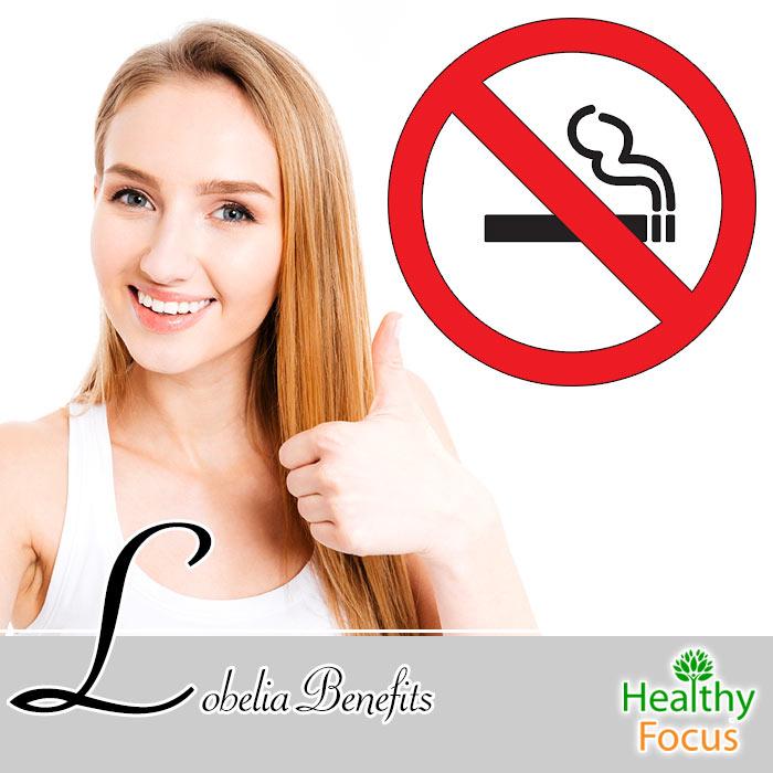 Lobelia Benefits Healthy Focus