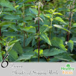 6 Proven Benefits of Stinging Nettle