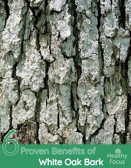 6 Proven Benefits of White Oak Bark