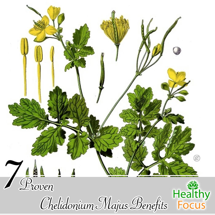 Chelidonium Majus Benefits