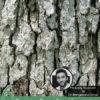 6 Proven Benefits of White Oak Bark