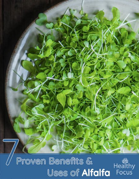 7 Proven Benefits and Uses of Alfalfa