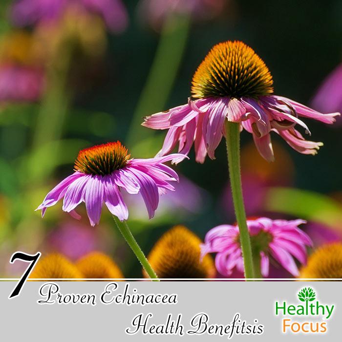 mig-7-proven-echinacea-health-benefits