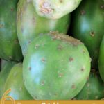 6 Proven Prickly Pear Fruit Benefits