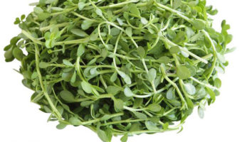 10 Proven Benefits of Bacopa Monnieri