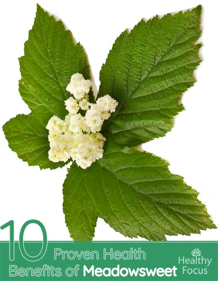Benefits of Meadowsweet
