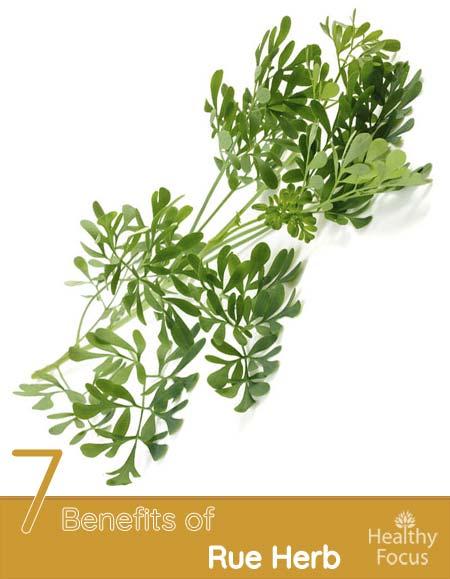 7 Benefits of Rue Herb