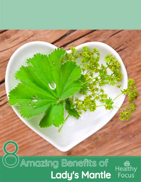 8 Amazing Benefits of Lady's Mantle