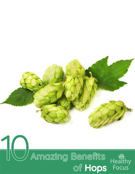 10 Amazing Benefits of Hops