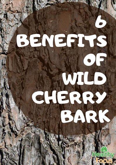 6 Benefits of Wild Cherry Bark