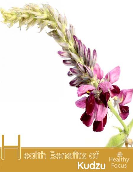 Benefits of Kudzu