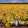 9 Sensational Sunflower Lecithin Benefits-(2018 Tips)