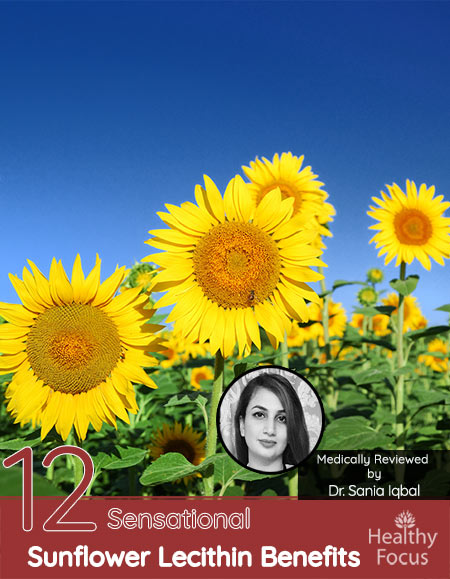 12 Sensational Sunflower Lecithin Benefits