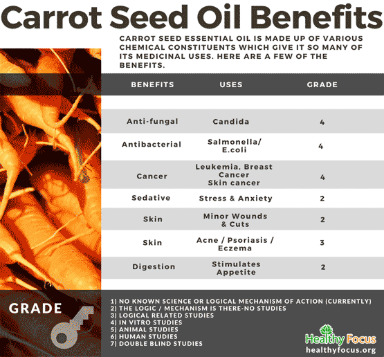 Benefits of Carrot Seed Essential Oil