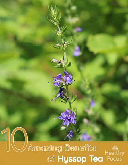 10 Amazing Benefits of Hyssop Tea