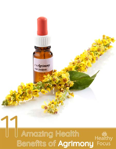 11 Amazing Health Benefits of Agrimony