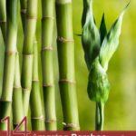 14 Amazing Bamboo Tea Benefits