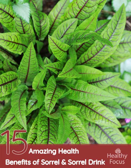 15 Amazing Health Benefits of Sorrel and Sorrel Drink