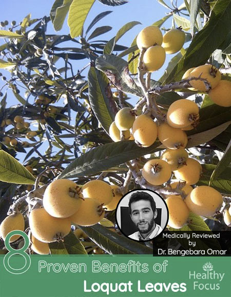 8 Proven Benefits of Loquat leaves