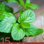 15 Amazing Benefits of Bergamot Mint Essential Oil