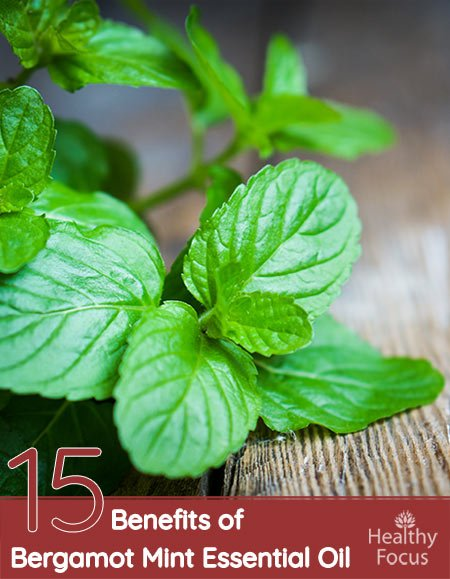 15 Amazing Benefits of Bergamot Mint Essential Oil