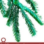 8 Proven Uses for Black Spruce Essential Oil