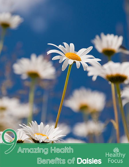 9 Amazing Health Benefits of Daisies