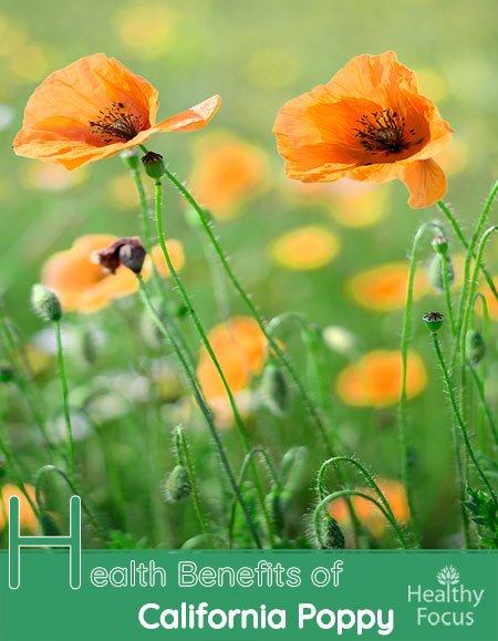 Health Benefits of California Poppy